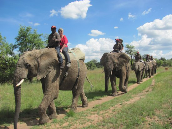 Adventures with Elephants: Safari Experience