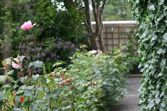 Murphy's Farmhouse: Rose garden in bloom