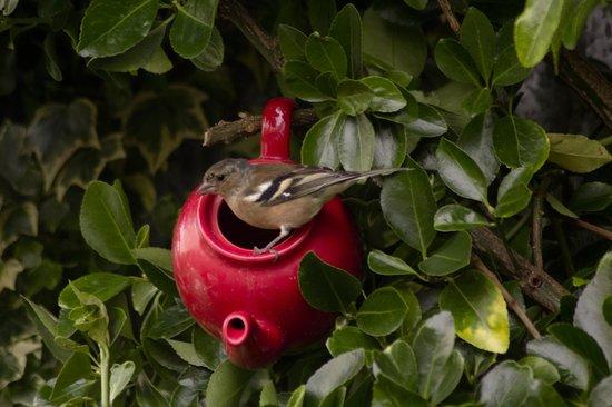 The Garden Cafe: Bird feeder in our garden