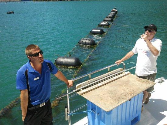 Greenshell Mussel Daily Cruise: Skipper Ryan