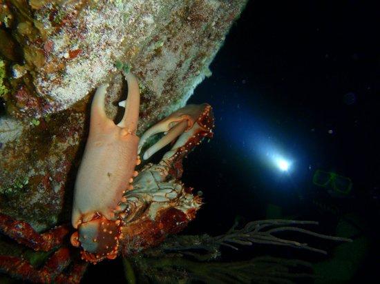 El Pulpo Divers: Crab