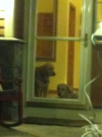 Cold Moon Farm Bed & Breakfast LLC: Who doesn't love coming back to two dogs waiting for you