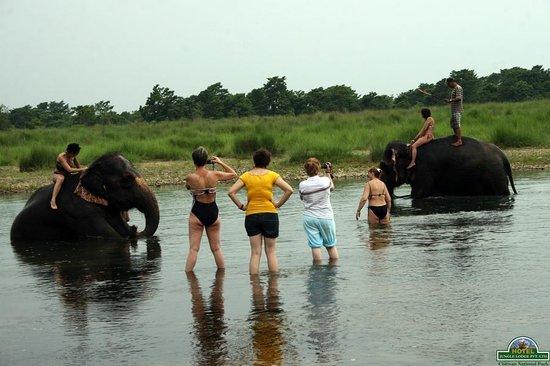 Hotel Jungle Lodge: guest at elephant bath