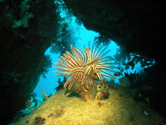 Sabye Sports Dive Adventures Thailand: Natures at it's finest.