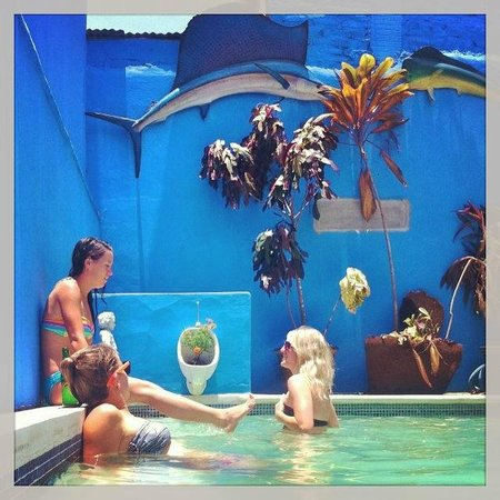 Hostel Pachamama: Pool 