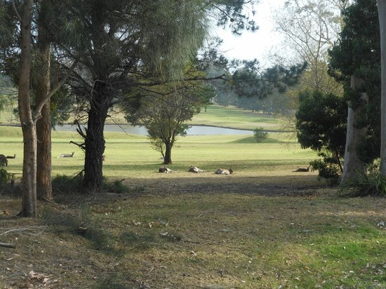 Golf View Motel: Golf Course View