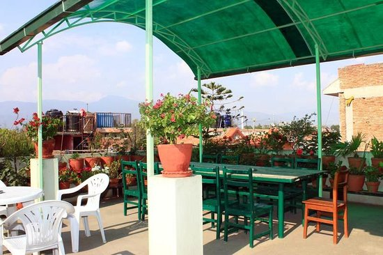Dolphin Guest House : Roof Garden