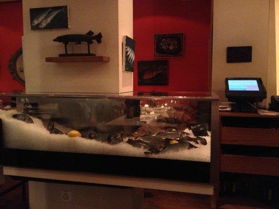 Bianchi : Display fish