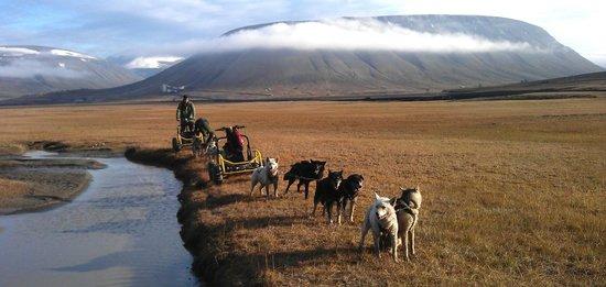 Svalbard Husky: Summertime dogsledding