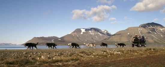 Svalbard Husky: Summertime dogsledding by wheels