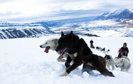 Svalbard Husky: Early summer dogsledding in the mountains