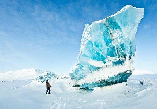 Svalbard Husky: Spectacular