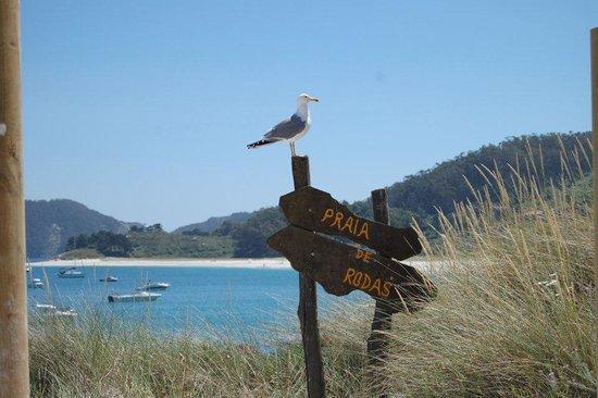 Barco Islas Cíes - Cruceros Rias Baixas: Playa de Rodas