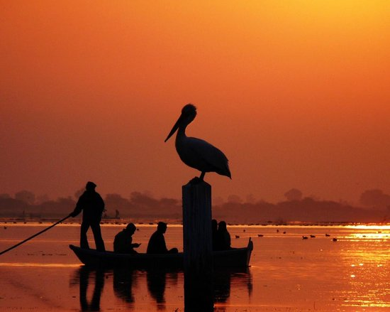 Nal Sarovar Birds Sanctuary: Pelican at Early Morning