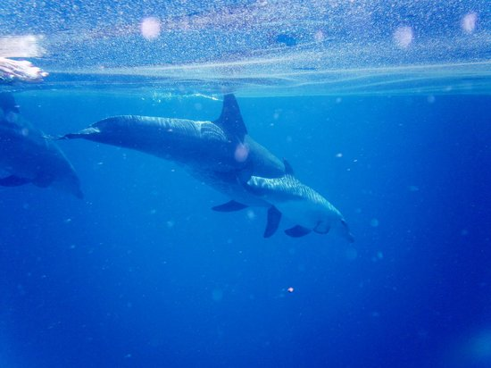 Azanzi Beach Hotel: many dophins
