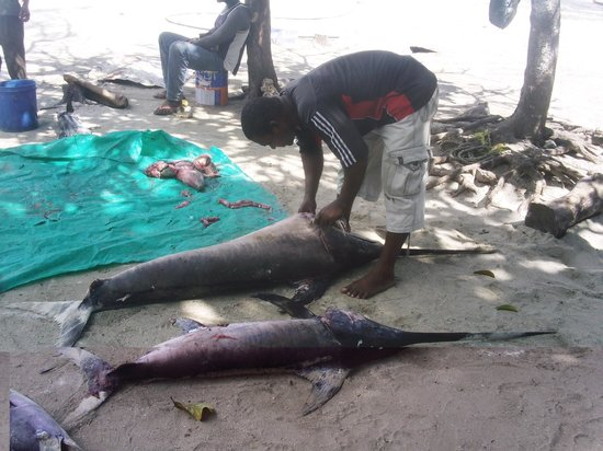 Azanzi Beach Hotel: fishing market nungwi