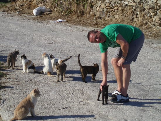 A Hotel by Mykonos Arhontiko: Cats everywhere!