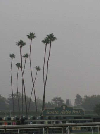 Santa Anita Race Park: Hazy morning just at dawn during morning workouts.