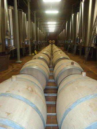 Vin en Vacances Tours: Barrels and tanks