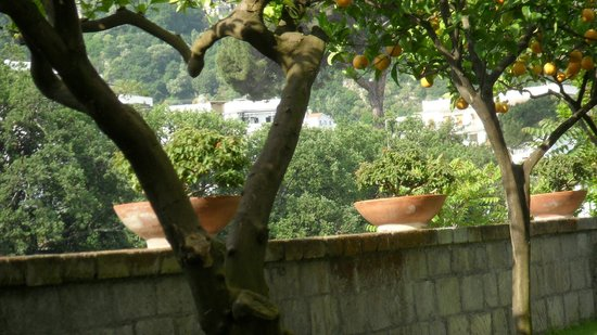 Antiche Mura Hotel: Orange tree by the pool