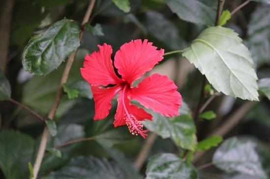 flower at La Boruca