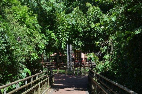 SelvaViva: lugar de bifurcación, uno al lado inferior otro al superior