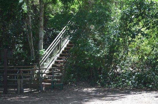 SelvaViva: escaleras por todos lados