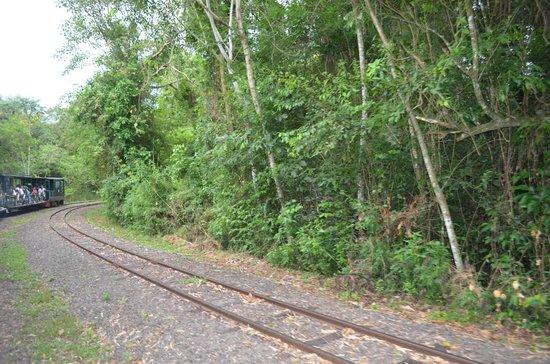 SelvaViva: el tren