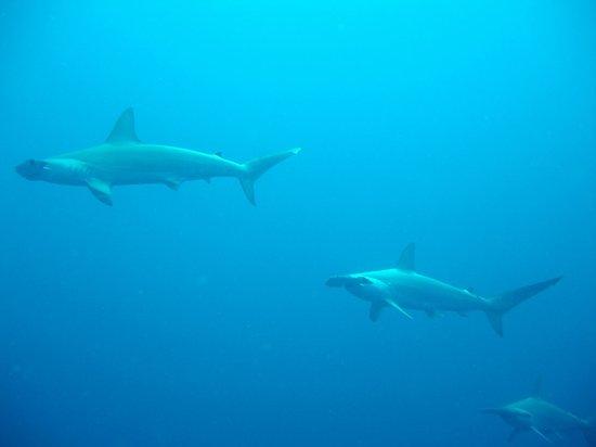 Breaker View: Amazing Shark dives at Protea Banks