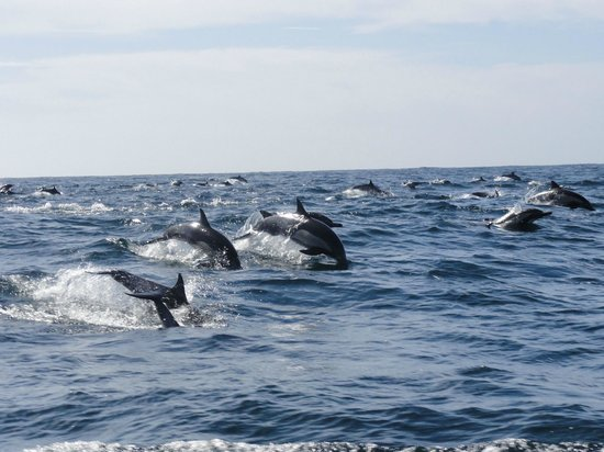 Love Shack Cruises : Too many dolphins to count!!