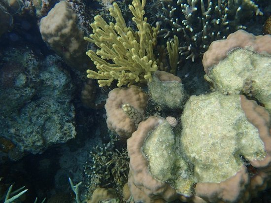 Majika's Island Resort: Snorkling at Coral Gardens
