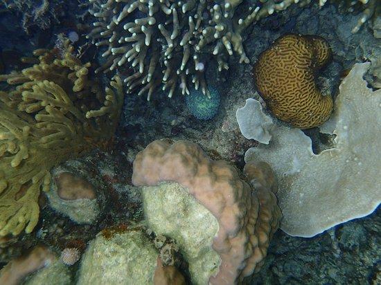 Majika's Island Resort: Snorkling