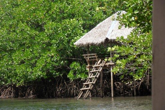 Majika's Island Resort: Mangrove Pathway