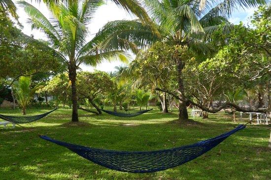 Majika's Island Resort: Garden