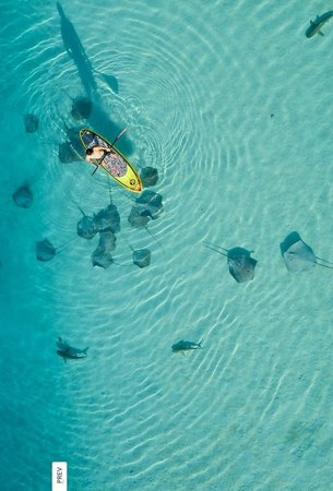 Moorea Paddle Board Adventures