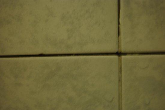 Hotel Villa Accini: mold in shower