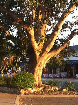 Watermark Hervey Bay: Gorgeous gardens and park areas