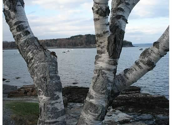 Bar Harbor Inn: Along the Rock Path