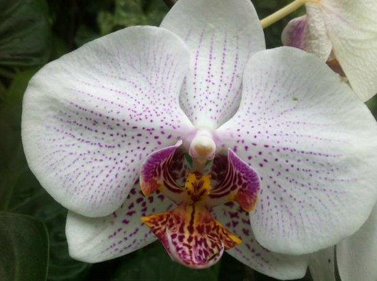 Royal Botanic Gardens Melbourne : Orchid