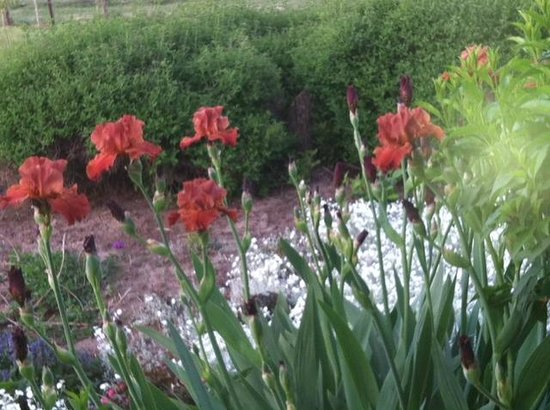 Walla Faces Inns at the Vineyard : Flowers abound during spring, summer and fall
