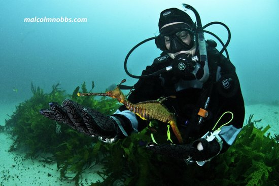 Coogee, Australia: Weedy Sea Dragon