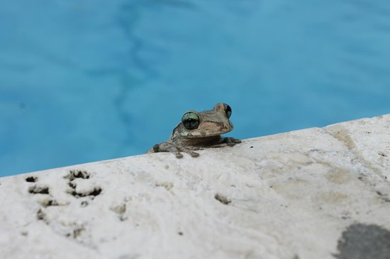 Catalonia Royal Bavaro: Frog that was in our umbrella
