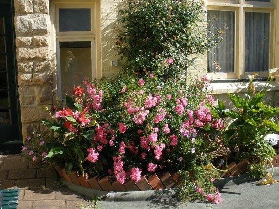 The Elms of Hobart : garden