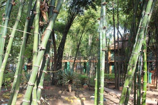 Nature Heritage Resort : Hotel landscape