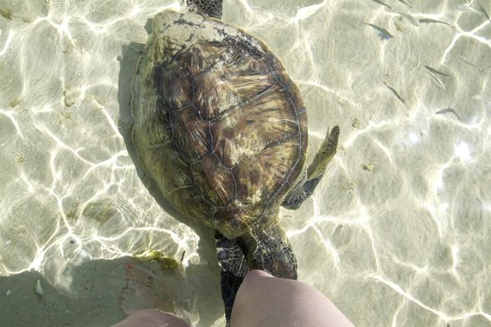 Capella Lodge: The beautiful turtles at Old Settlement