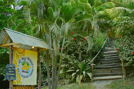 El Rey Patricio: entrance, leading into the jungle