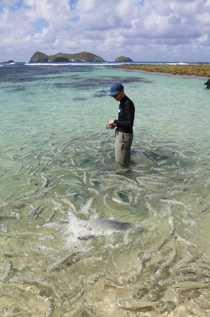 Capella Lodge: Fish feeding at Ned's Beach