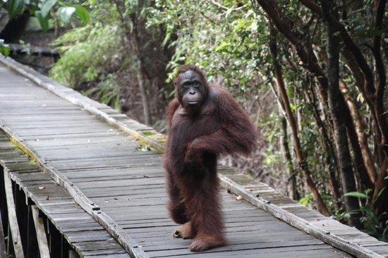Tanjung Puting National Park: Pondok Tanggui local