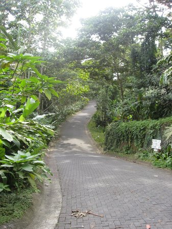 Lost Iguana Resort & Spa: driveway up to the