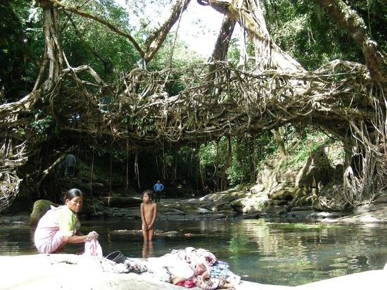 Mawlynnong Waterfall: Il ponte di radici